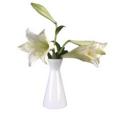 21 Vasen